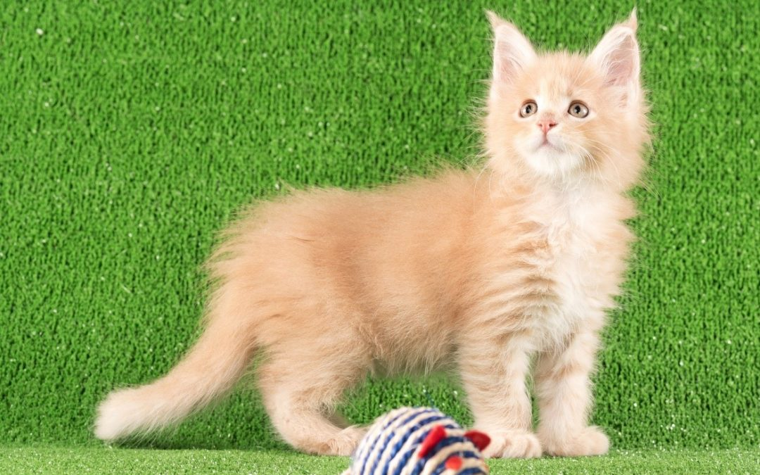 3 Essential Considerations for a Pet-Friendly Artificial Turf Installation in Houston, TX